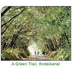 green-trail-kodaikanal